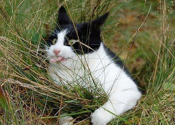 Fotos de animais hilariamente desajeitados (19)
