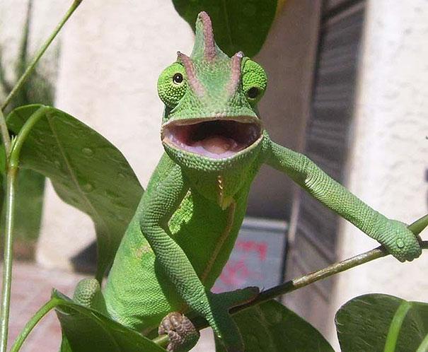 Fotos de animais hilariamente desajeitados (20)