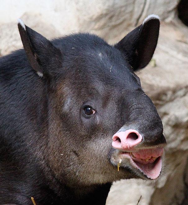 Fotos de animais hilariamente desajeitados (5)