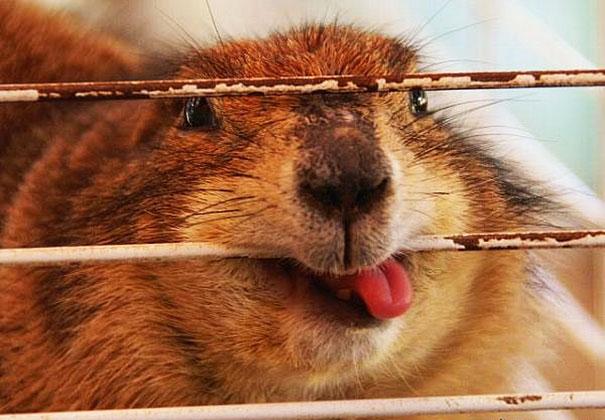 Fotos de animais hilariamente desajeitados (8)