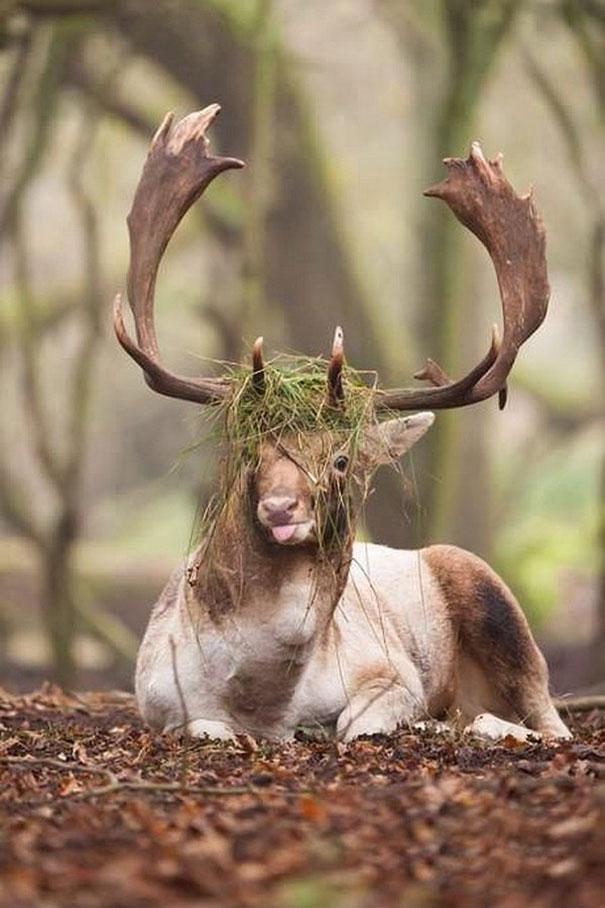 Fotos de animais hilariamente desajeitados (9)