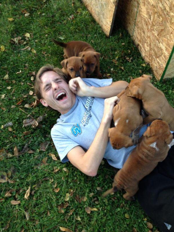 Quando cachorros atacam (5)
