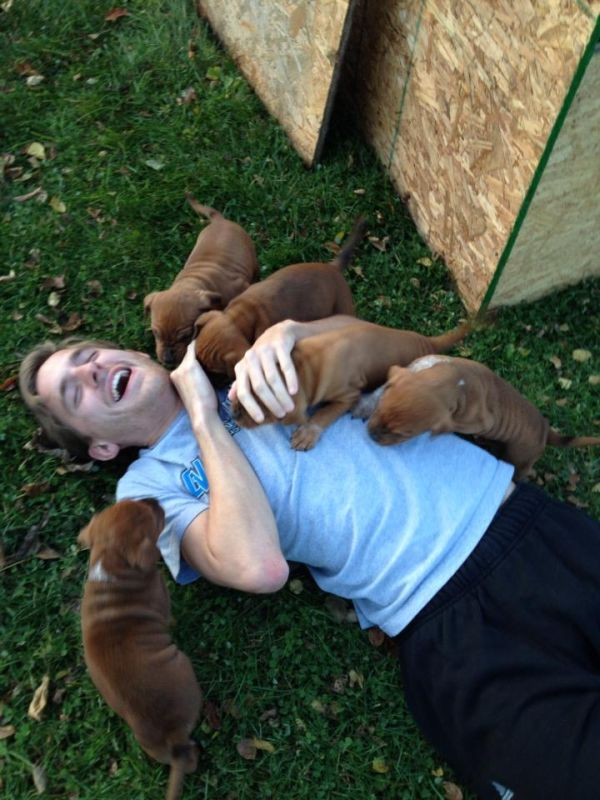 Quando cachorros atacam (6)