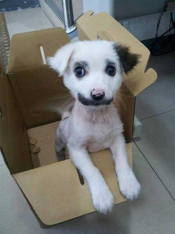Cachorros-diferentes-por-suas-marcas-inusitadas-no-corpo