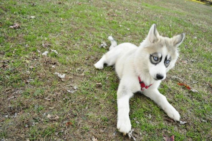 Cachorros-diferentes-por-suas-marcas-inusitadas-no-corpo (15)