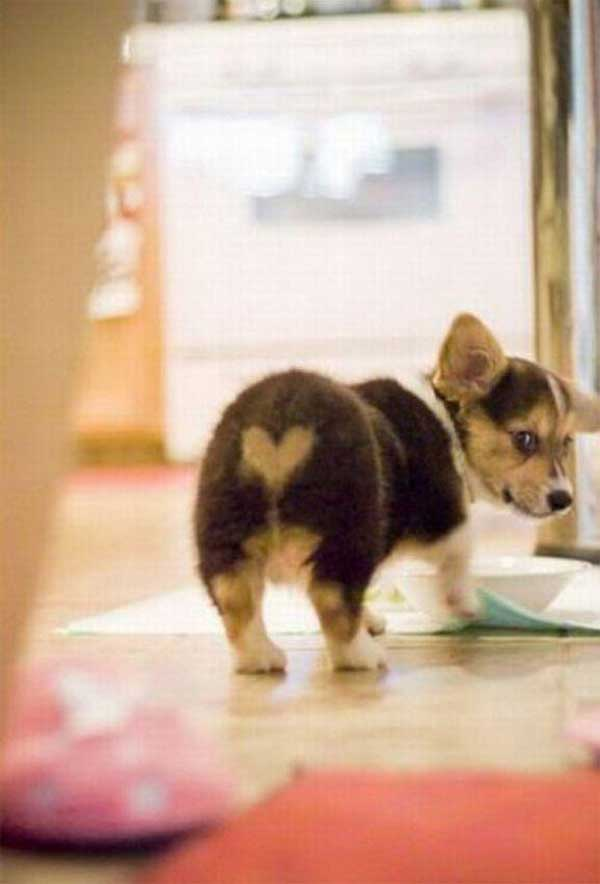 Cachorros-diferentes-por-suas-marcas-inusitadas-no-corpo (3)