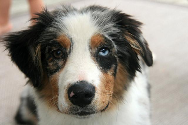 Cachorros-diferentes-por-suas-marcas-inusitadas-no-corpo (6)