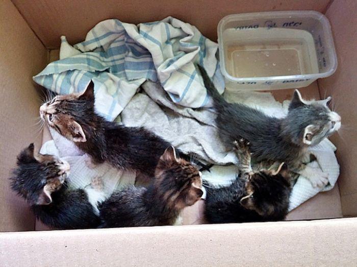 Gatinhos abandonados se recuperam (1)