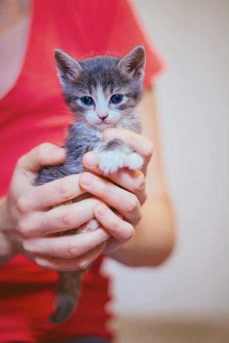 Gatinhos abandonados se recuperam (11)