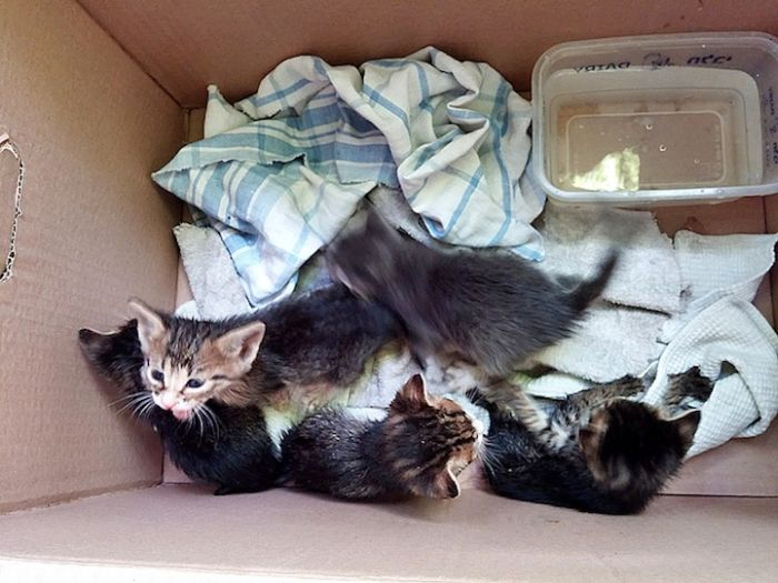 Gatinhos abandonados se recuperam (2)