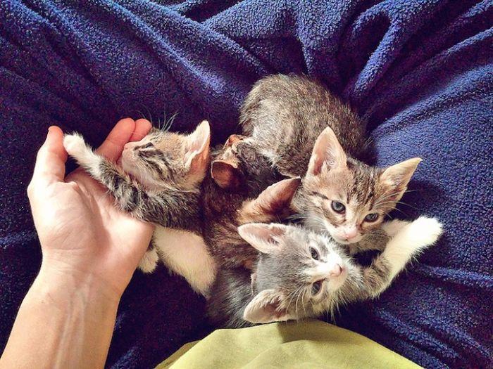 Gatinhos abandonados se recuperam (3)