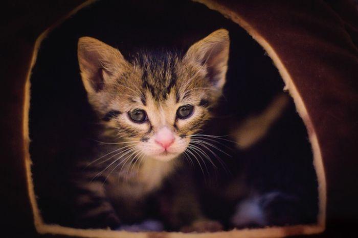Gatinhos abandonados se recuperam (4)