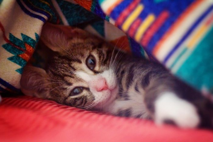 Gatinhos abandonados se recuperam (5)