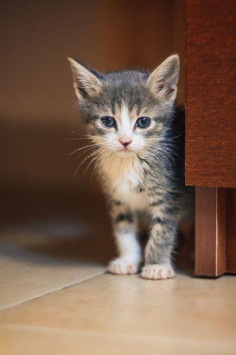 Gatinhos abandonados se recuperam (8)