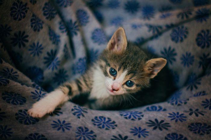 Gatinhos abandonados se recuperam (9)