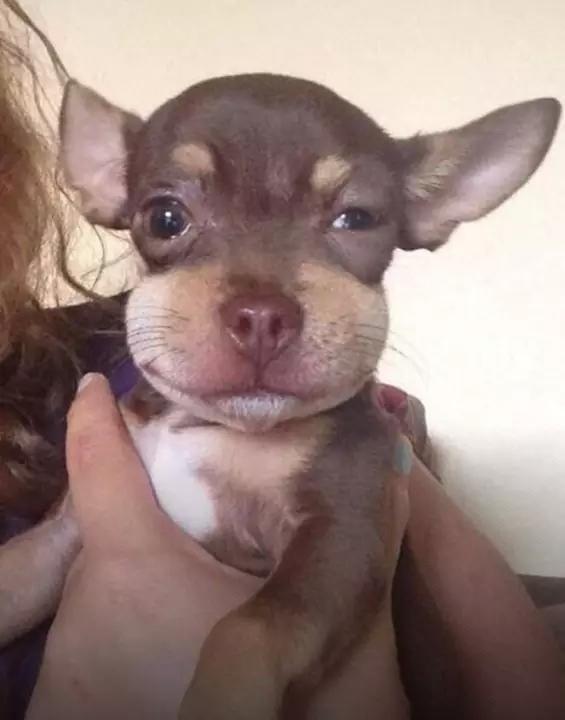 O-que-acontece-quando-cachorros-comem-abelhas-Blog-Animal (2)