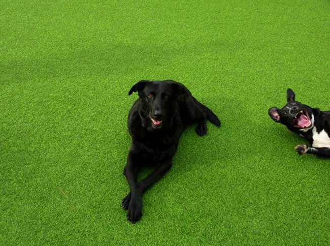 Os melhores photobombs de cachorros (1)