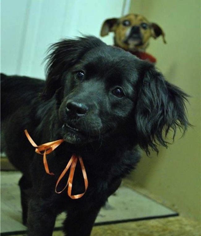 Os melhores photobombs de cachorros (13)