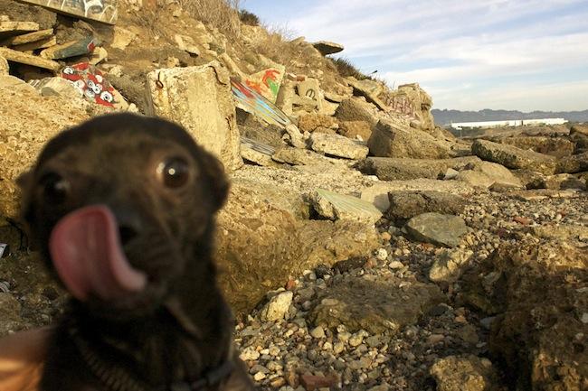 Os melhores photobombs de cachorros (14)