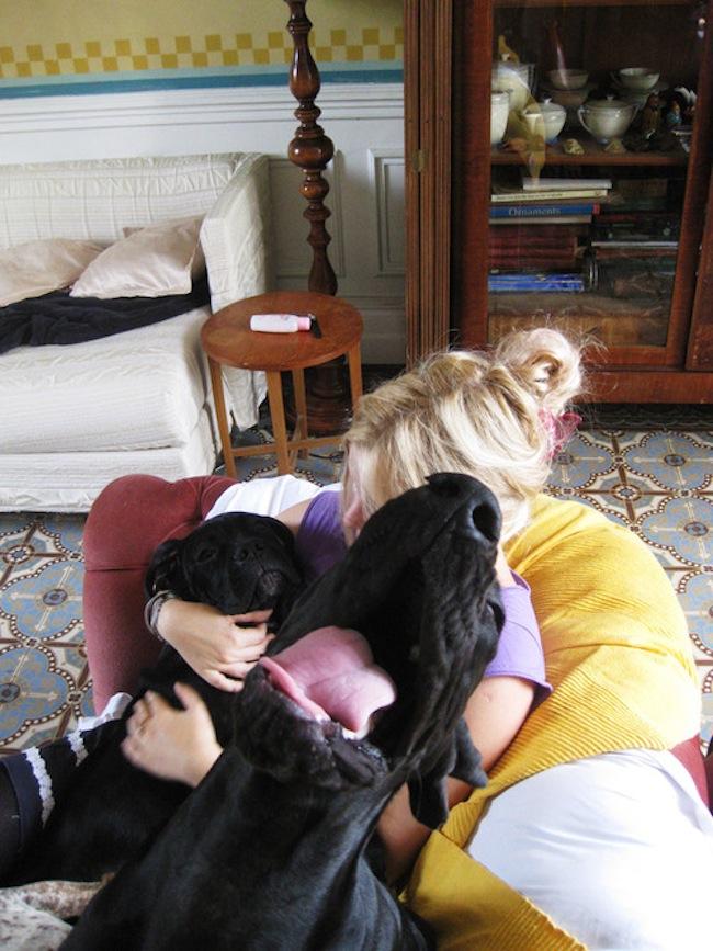 Os melhores photobombs de cachorros (16)