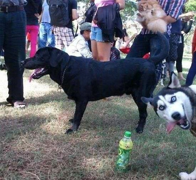 Os melhores photobombs de cachorros (5)