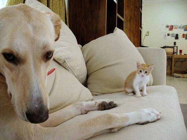 Os melhores photobombs de cachorros (8)