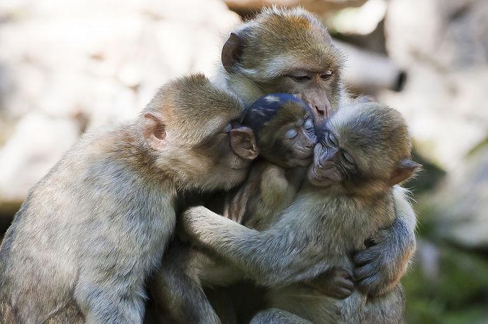 Papais e mamães mais fofos do mundo animal