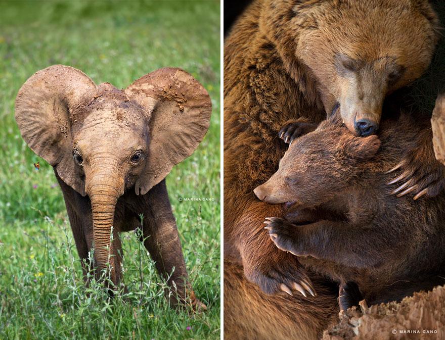 A majestosa beleza de animais selvagens capturados por Marina Cano (1)