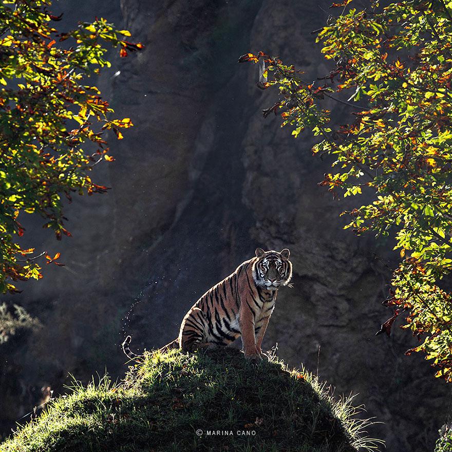 A majestosa beleza de animais selvagens capturados por Marina Cano (11)