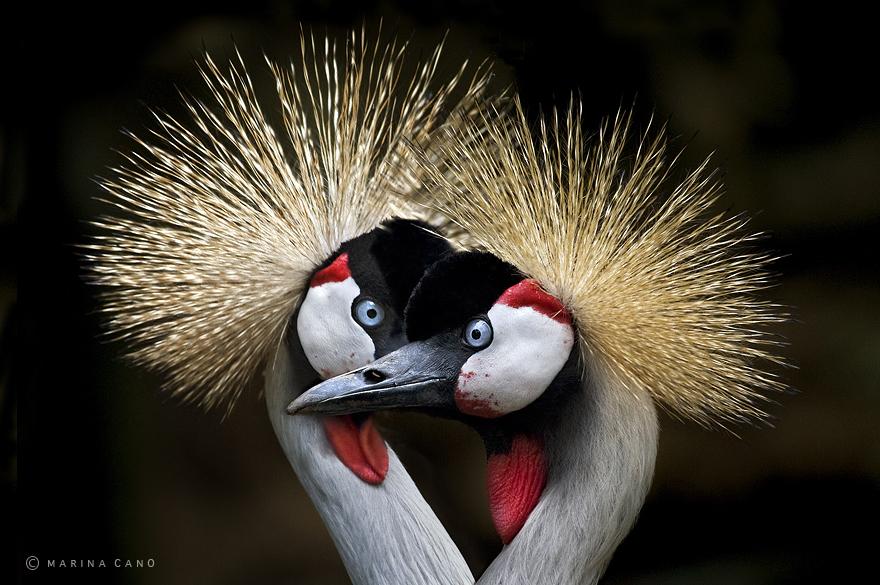A majestosa beleza de animais selvagens capturados por Marina Cano (14)