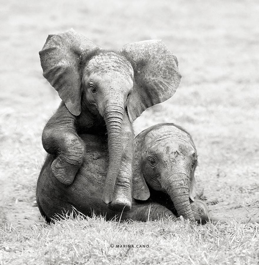 A majestosa beleza de animais selvagens capturados por Marina Cano (17)