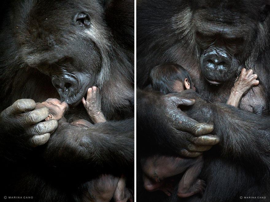 A majestosa beleza de animais selvagens capturados por Marina Cano (3)