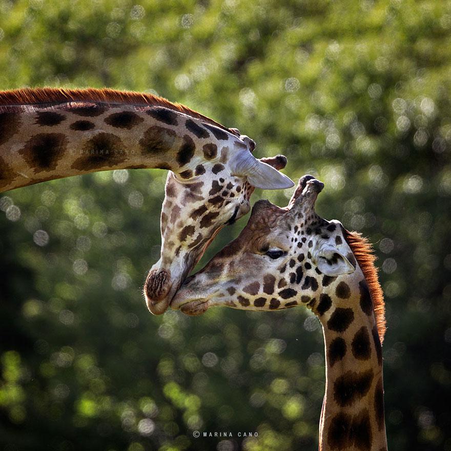 A majestosa beleza de animais selvagens capturados por Marina Cano (5)