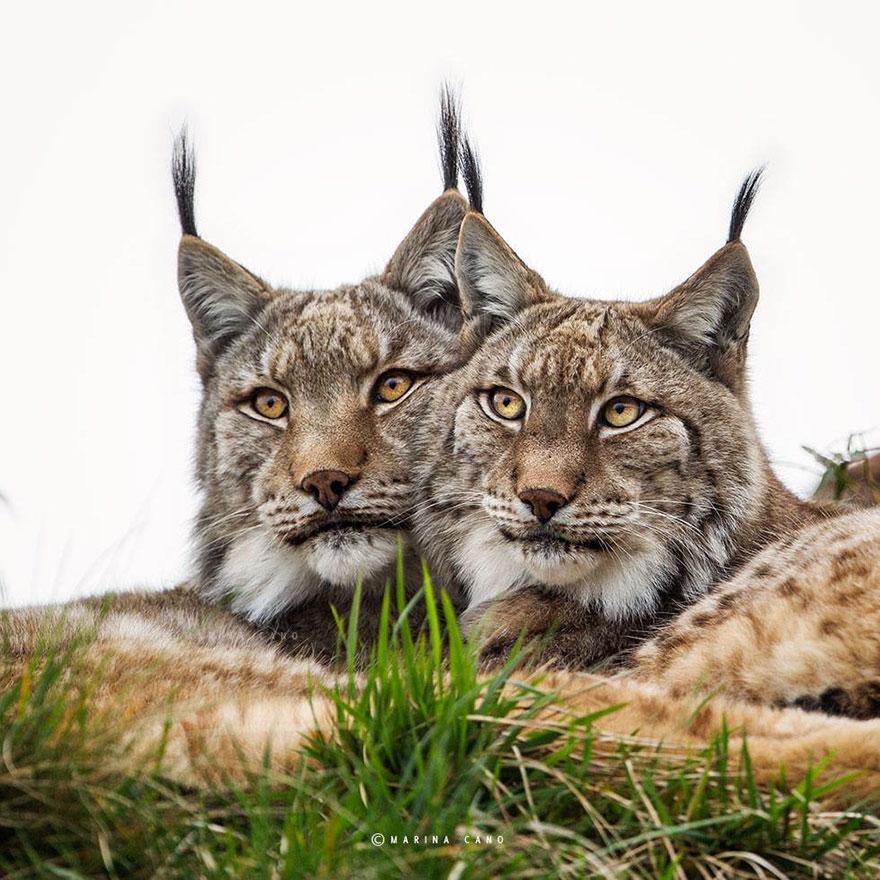 A majestosa beleza de animais selvagens capturados por Marina Cano (8)