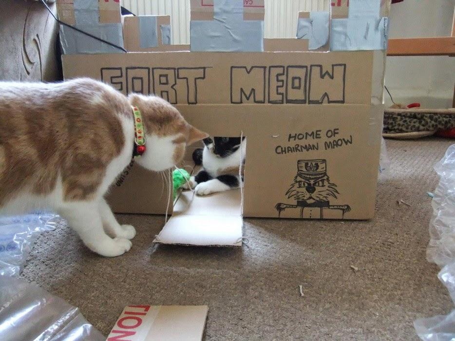Esconderijos-mais-criativos-para-gatos-Blog-Animal (21)