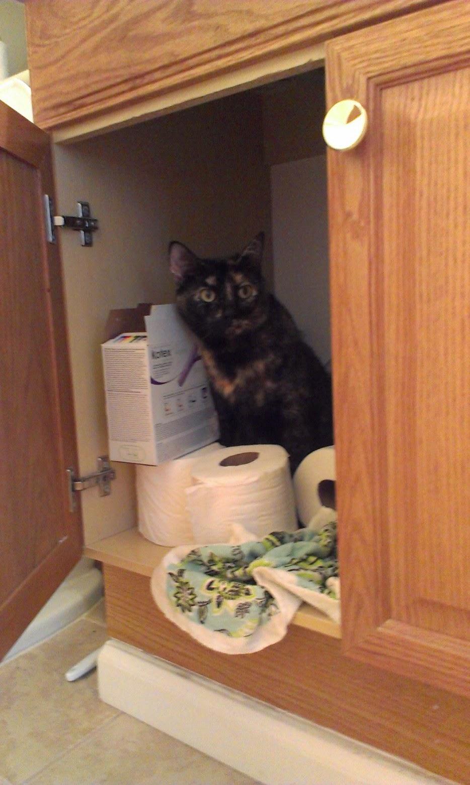 Esconderijos-mais-criativos-para-gatos-Blog-Animal (22)