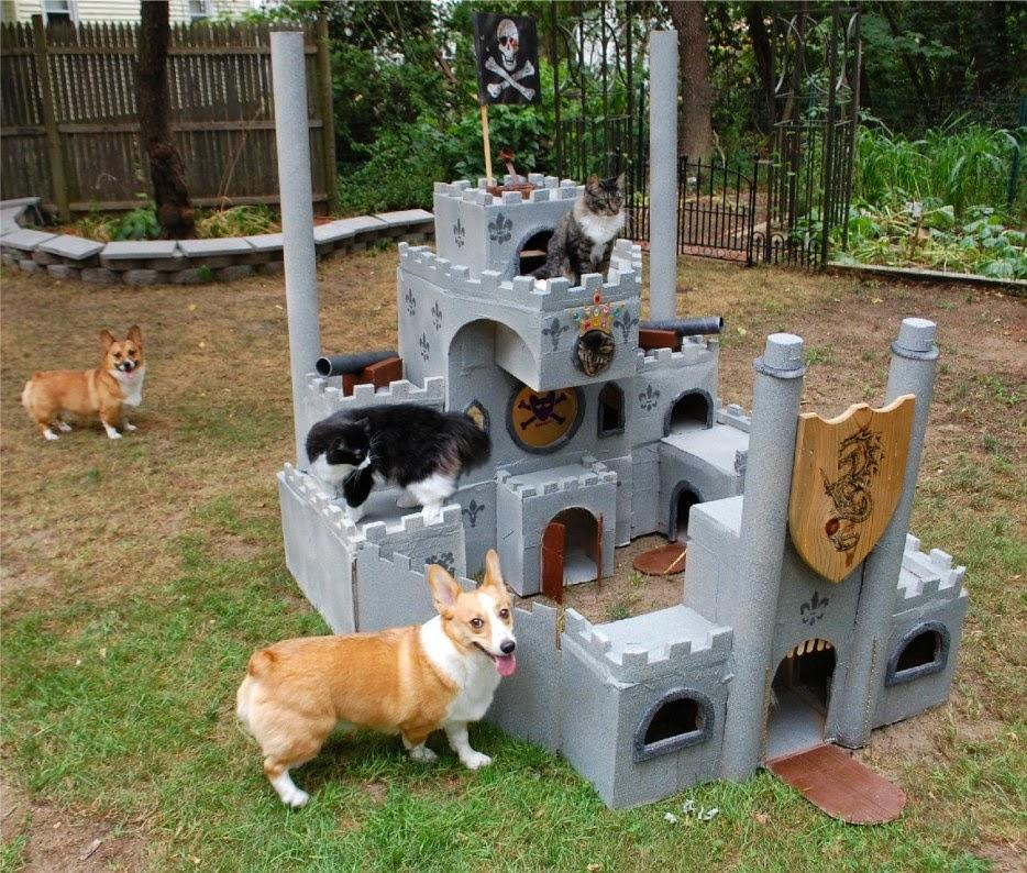 Esconderijos-mais-criativos-para-gatos-Blog-Animal (6)