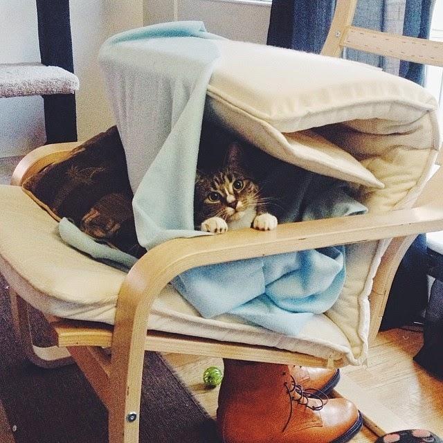 Esconderijos-mais-criativos-para-gatos-Blog-Animal (9)