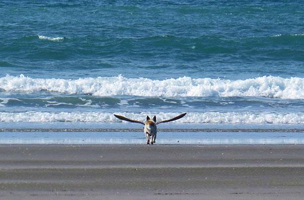 Fotos de cachorros tiradas no momento certo (1)