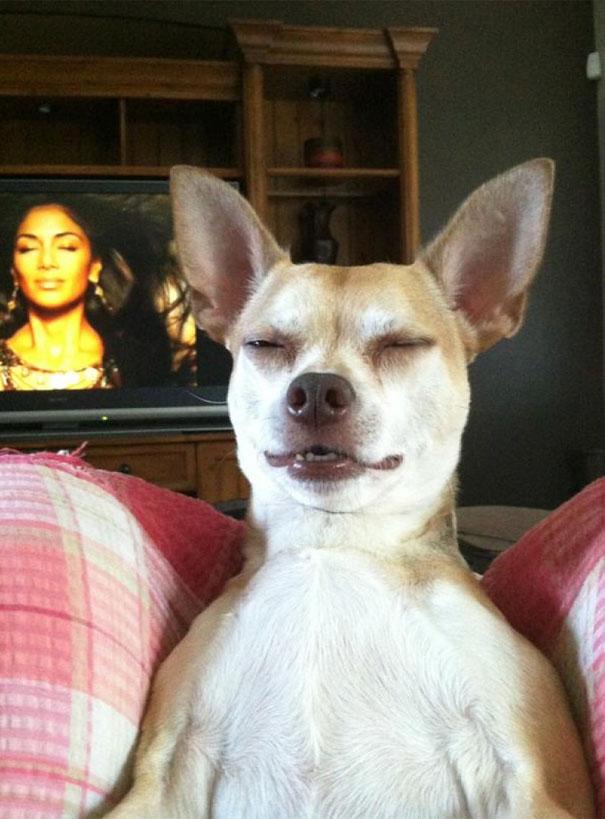Fotos de cachorros tiradas no momento certo (14)