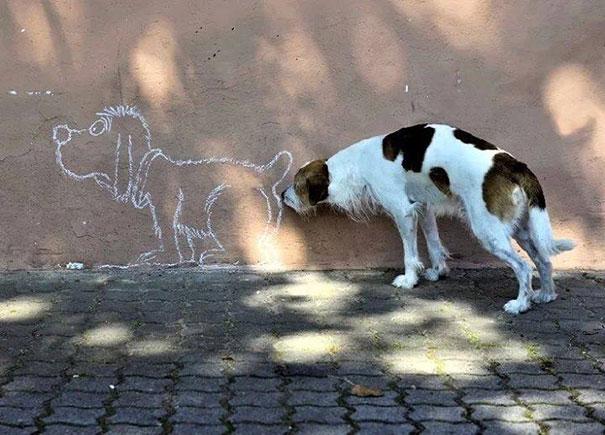 Fotos de cachorros tiradas no momento certo (17)