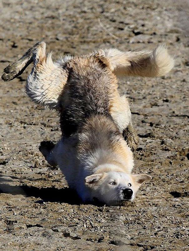 Fotos de cachorros tiradas no momento certo (20)