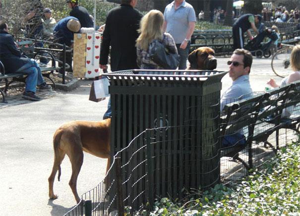 Fotos de cachorros tiradas no momento certo (21)