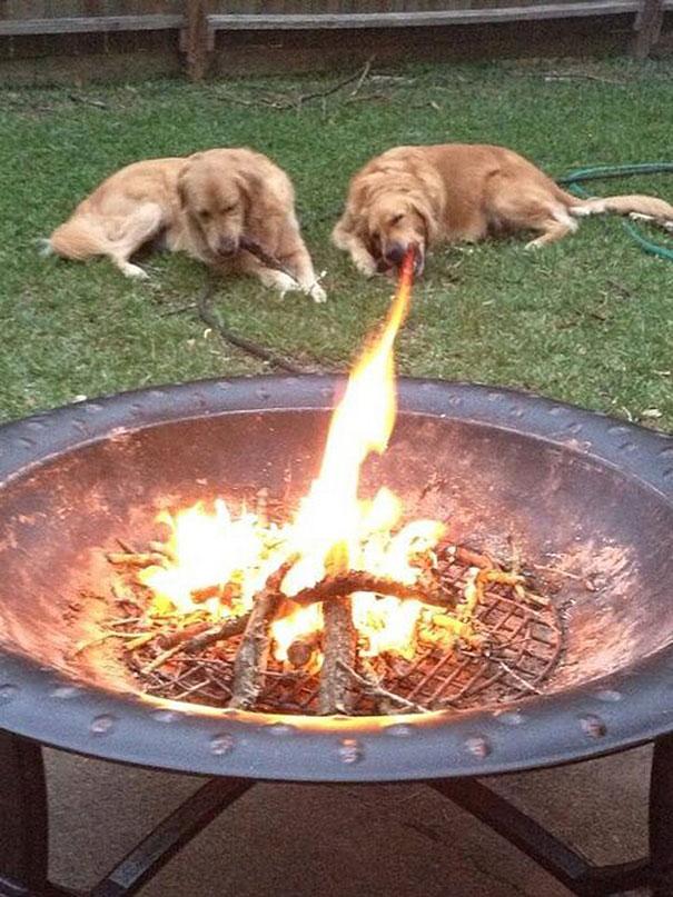 Fotos de cachorros tiradas no momento certo (23)