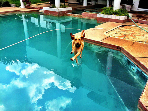 Fotos de cachorros tiradas no momento certo (27)