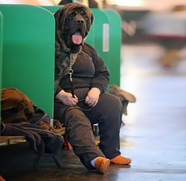 Fotos de cachorros tiradas no momento certo (28)