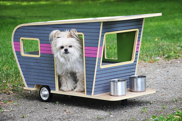 Ideias criativas para cachorros (12)