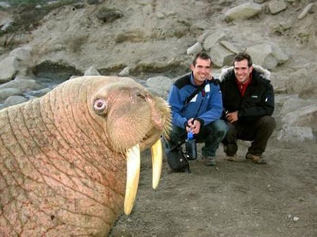 Os-melhores-photobombs-de-animais-Blog-Animal (1)