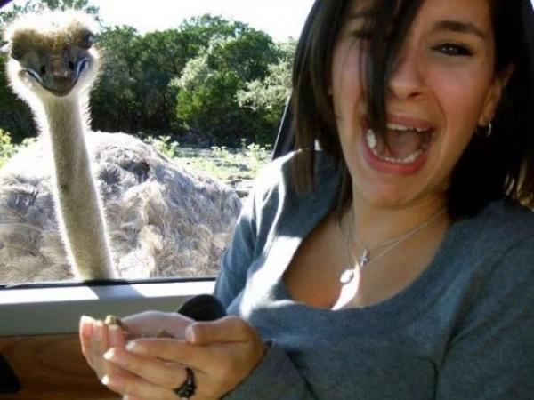 Os-melhores-photobombs-de-animais-Blog-Animal (3)