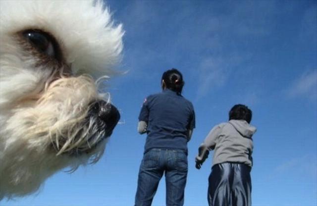 Os-melhores-photobombs-de-animais-Blog-Animal (4)